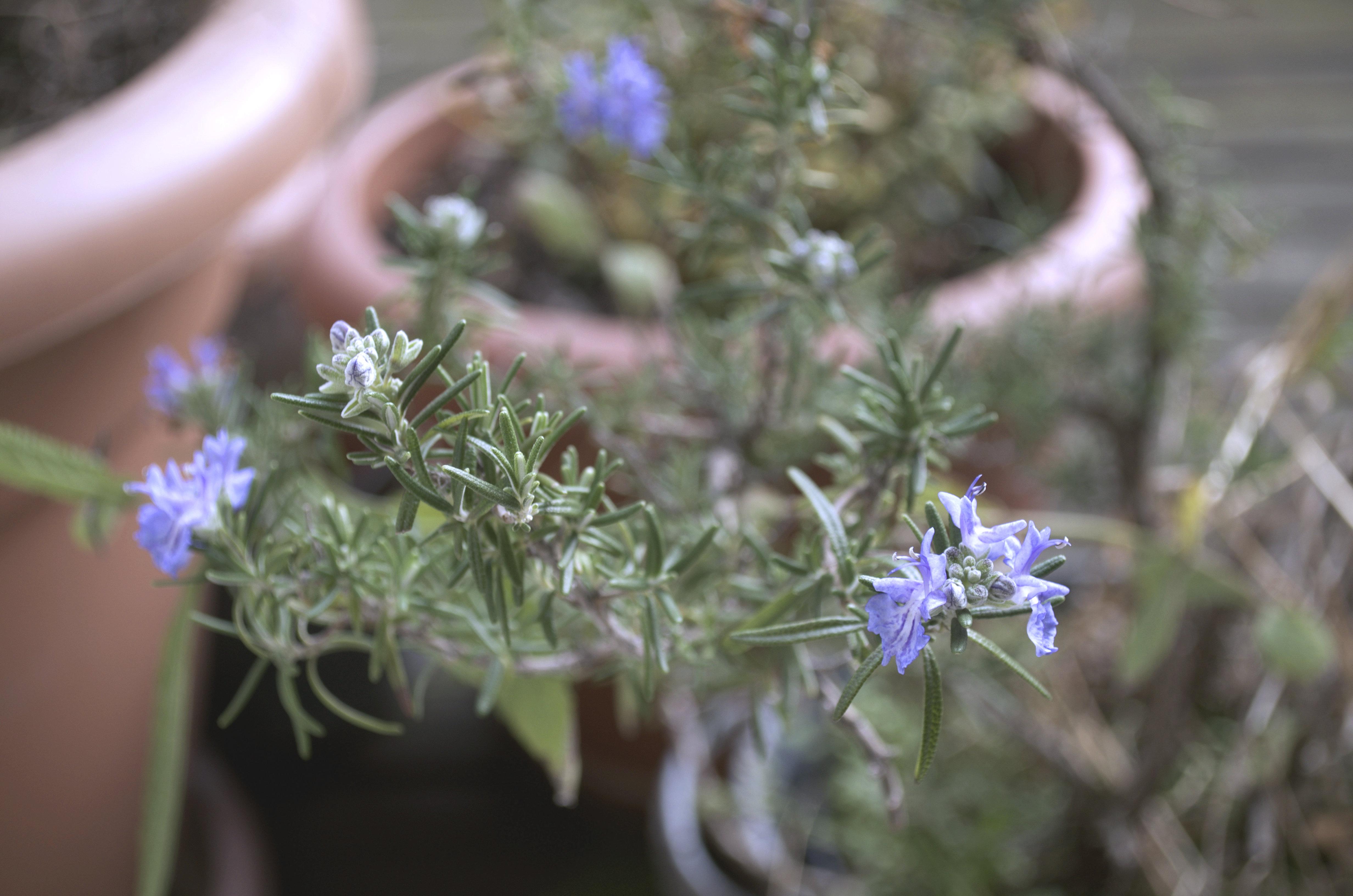 Der Garten Im Februar der yok garten im februar ye olde kitchen food und gartenblog