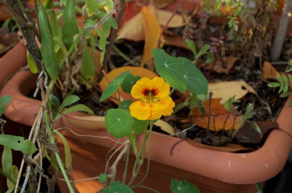 Den Balkon Winterfest Machen Ye Olde Kitchen Food Und Gartenblog
